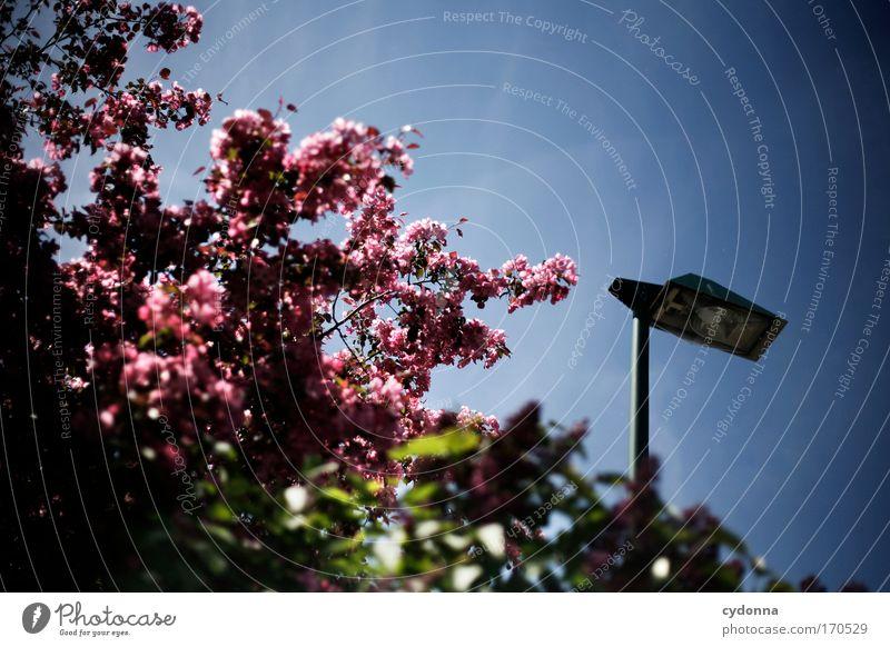 Unter freiem Himmel Himmel Natur schön Baum Pflanze Umwelt Leben Gefühle Freiheit Bewegung Blüte Traurigkeit Frühling träumen Lampe Zeit