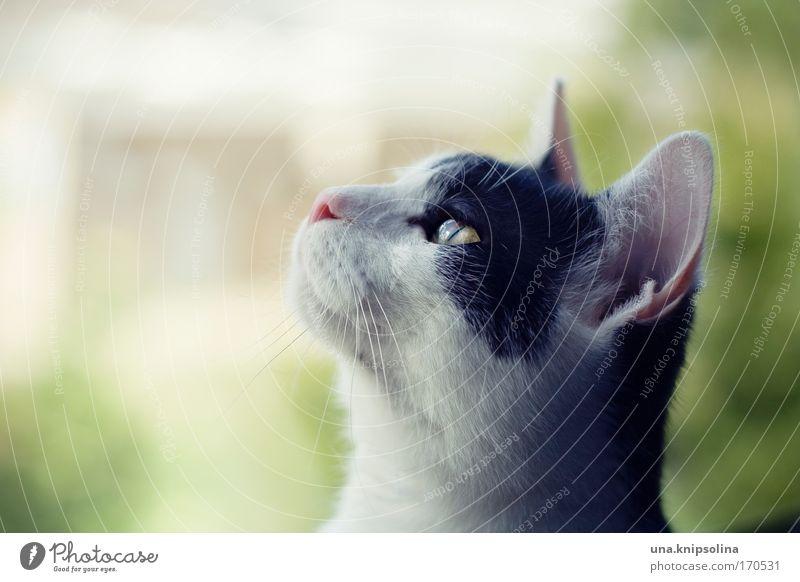 peter Katze Natur grün weiß Pflanze Baum Tier schwarz träumen weich niedlich beobachten Neugier Fell Tiergesicht hören