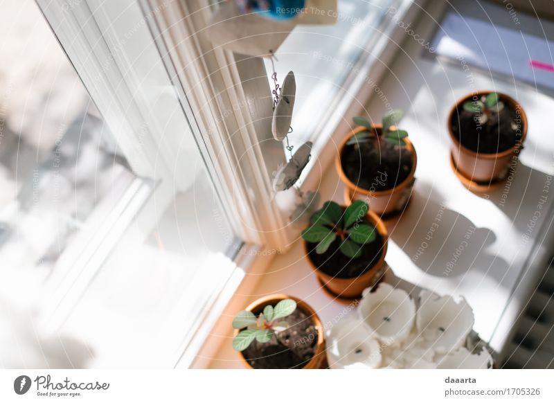 Sonnenschein Lifestyle elegant Design Freude Leben harmonisch Freizeit & Hobby Ausflug Abenteuer Freiheit Sommer Häusliches Leben Wohnung Traumhaus
