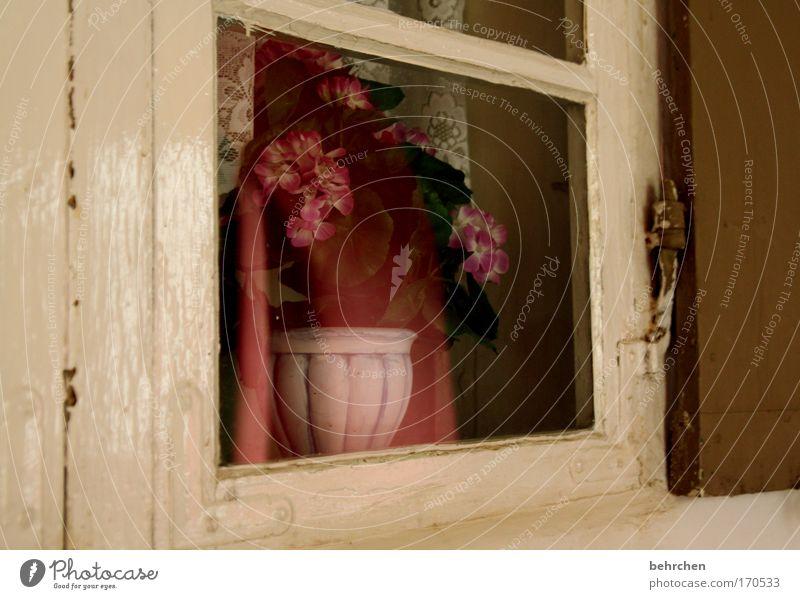 das geheime fenster alt Einsamkeit Fenster Traurigkeit Zufriedenheit Hoffnung Vergänglichkeit Schutz fantastisch Vertrauen Glaube Bauwerk Vergangenheit Denkmal