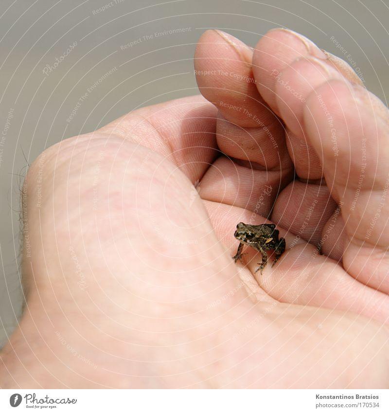 bitteschön Schiffi... Farbfoto Außenaufnahme Nahaufnahme Tag Sonnenlicht Tierporträt Freiheit Hand Finger 1 Mensch Natur Teich See Bach Frosch Tierjunges