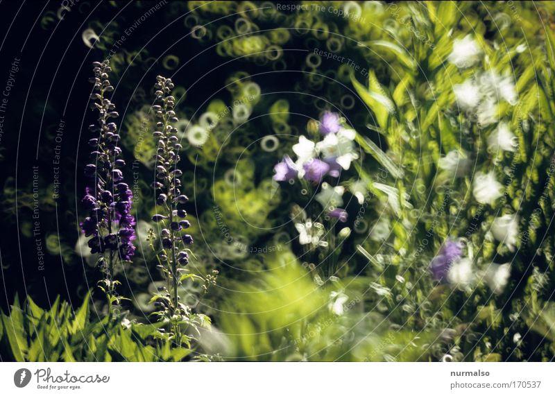 Unser Garten I Natur Ferien & Urlaub & Reisen Pflanze Blume Tier Haus Wiese Gras Blüte Park Häusliches Leben Dekoration & Verzierung Sträucher Schönes Wetter exotisch Grünpflanze