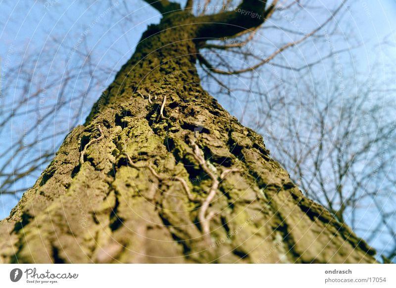 Aufwärts Baum Baumrinde Wald Sonne Blatt Pflanze Strahlung Naturwuchs hoch Himmel Baumstamm Ast