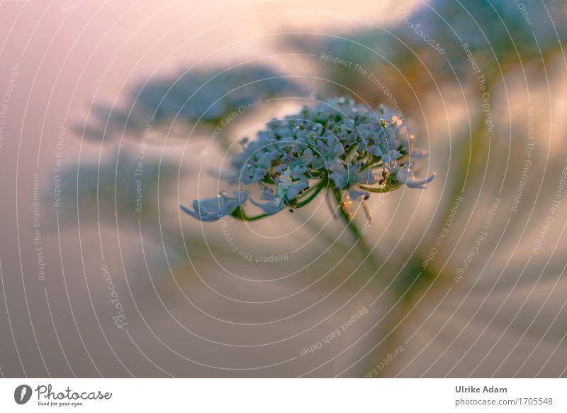 Weiße Blüten im Licht Natur Pflanze Sommer weiß Wald Wärme Blüte Innenarchitektur Wiese Kunst Garten orange Design wild leuchten Häusliches Leben