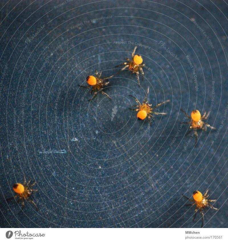 on the dancefloor Farbfoto Spielen Spinne Tiergruppe Netz Netzwerk Zusammensein dunkel Ekel gruselig blau gelb Angst Spinnennetz Spinnenbeine Nachkommen