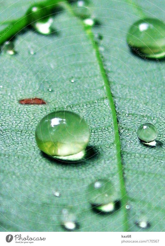 Perlen am Morgen Strukturen & Formen Tag Schatten Natur Pflanze Wassertropfen Frühling Sommer Unwetter Regen Gewitter Gras Blatt Park Wiese Feld Urwald grün