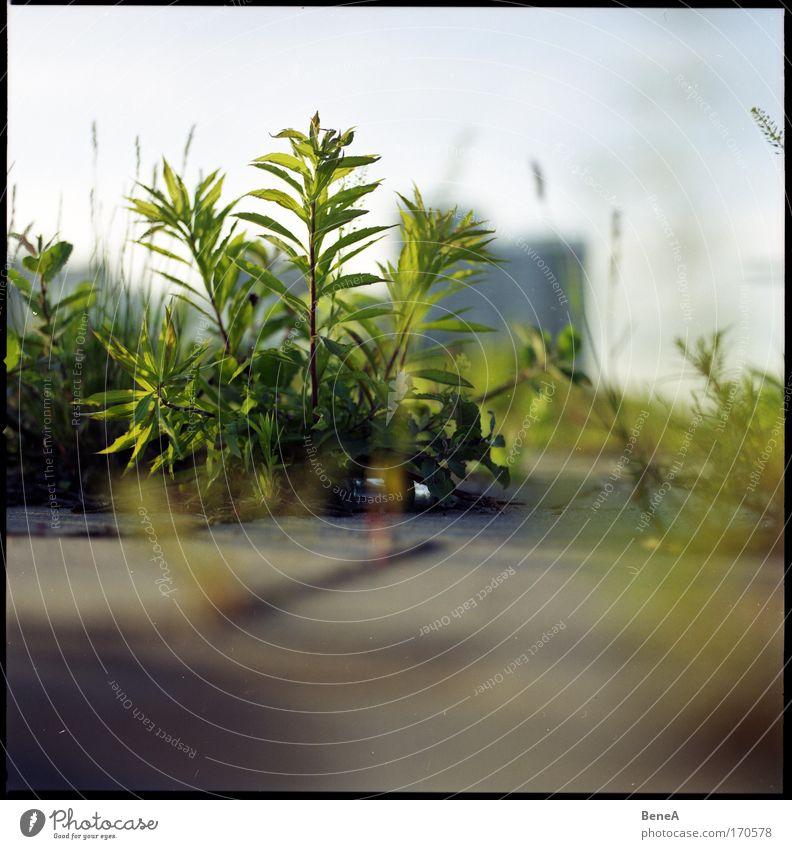 Beton Natur alt grün Sommer Pflanze Umwelt Leben Gras grau klein natürlich Wachstum Sträucher Boden Bauwerk Bahnhof