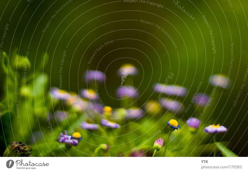 Blütenrausch Natur Blume grün Pflanze Sommer Blüte Frühling Stimmung klein elegant Umwelt frei ästhetisch Wachstum Sträucher Ende