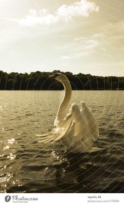 Hier wohne ich Wasser schön Sonne ruhig Tier See Stimmung Zusammensein Vogel Romantik authentisch Feder Flügel Warmherzigkeit Wildtier Verliebtheit