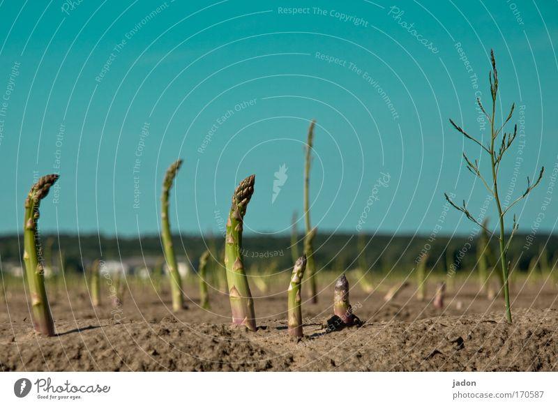 starke zuneigung Außenaufnahme Textfreiraum oben Froschperspektive Ernährung Bioprodukte Landschaft Erde Sand Wolkenloser Himmel Feld Tanzen Leidenschaft