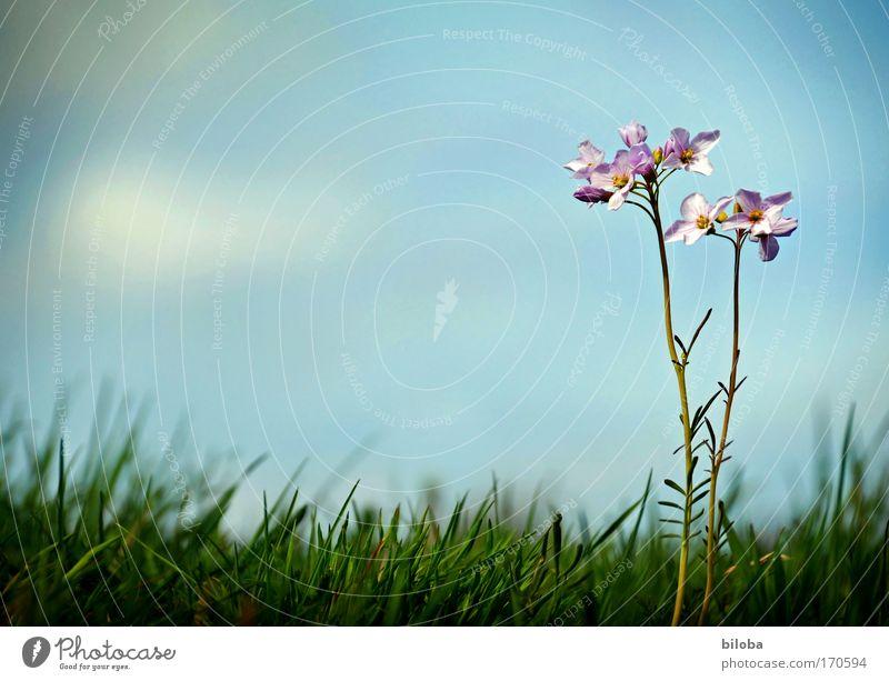 Die Schönste im ganzen Land! Natur schön Himmel Blume grün blau Pflanze Sommer Wiese Gefühle Blüte Glück Zufriedenheit Umwelt Erfolg hoch