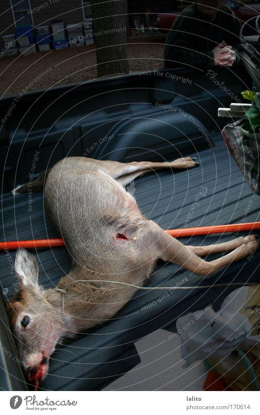 Tier dunkel Tod trist Wildtier dumm Totes Tier