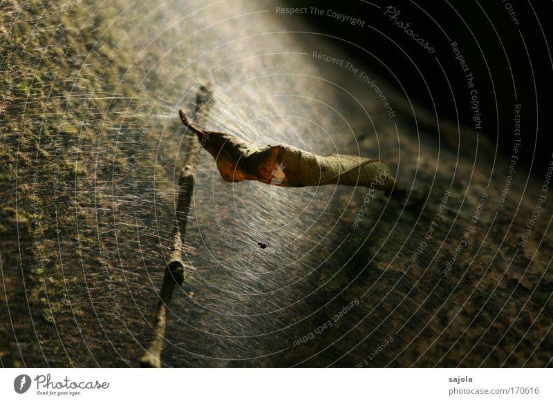 versponnen Umwelt Natur Pflanze Baum Blatt liegen alt ästhetisch dunkel natürlich trist trocken braun schwarz Verfall Vergänglichkeit Wandel & Veränderung Ast