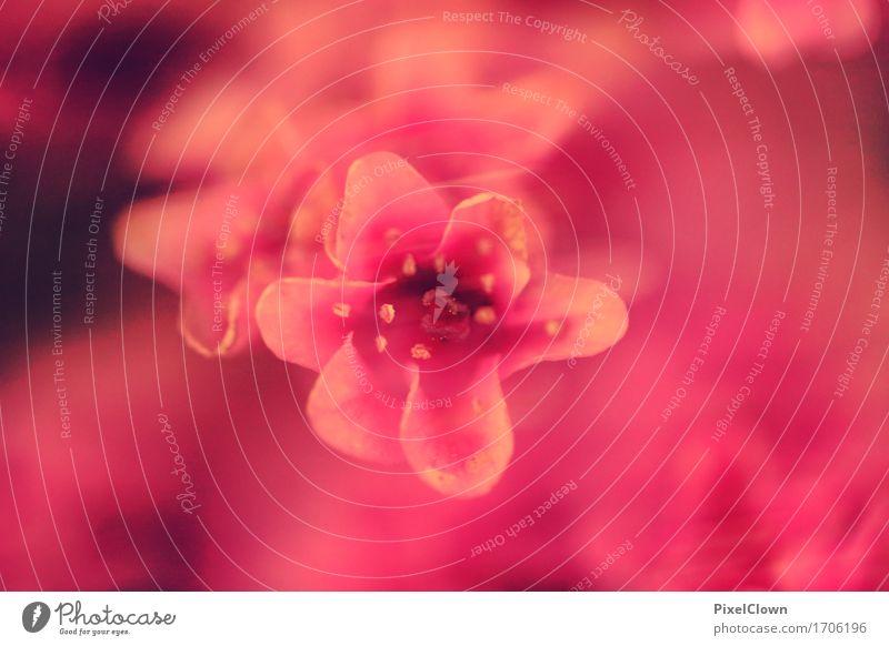 Blumen Lifestyle elegant schön Kosmetik Wellness harmonisch Wohlgefühl Zufriedenheit Sinnesorgane Spa Landwirtschaft Forstwirtschaft Natur Pflanze Blüte Garten