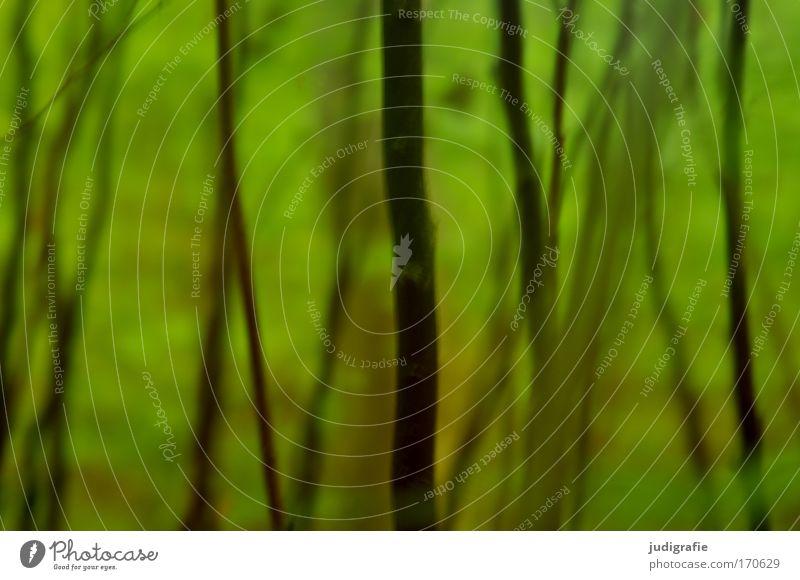 Wald Farbfoto Außenaufnahme Experiment Tag Unschärfe Umwelt Natur Pflanze Frühling Sommer Baum Sträucher grün Unterholz
