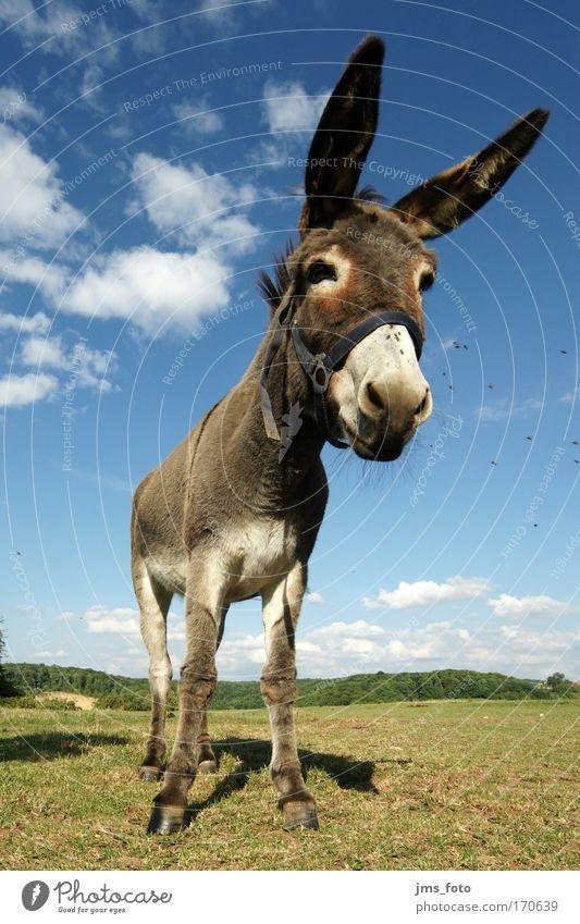 Du Esel! Farbfoto Außenaufnahme Starke Tiefenschärfe Froschperspektive Weitwinkel Tierporträt Blick nach unten Natur Nutztier Fliege 1 Freude Tag