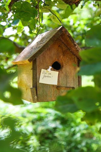 im garten Natur Baum Blatt Haus Wald Garten Kommunizieren Information Hütte Zettel Futterhäuschen Traumhaus