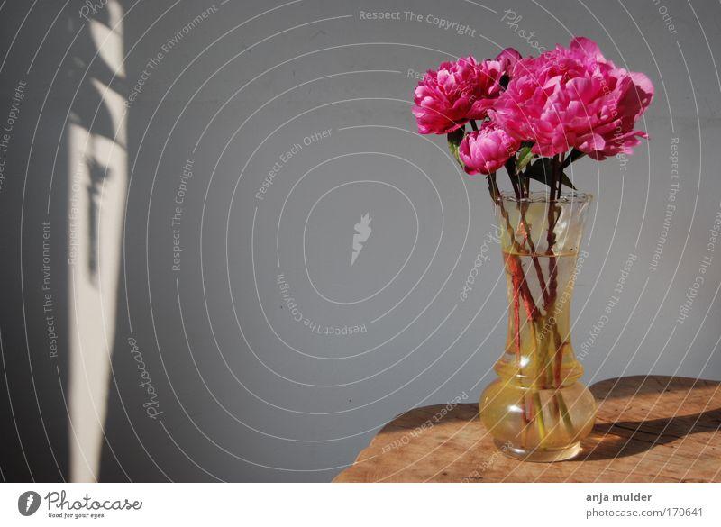 Blume ruhig Blüte Holz rosa Glas Rose Dekoration & Verzierung
