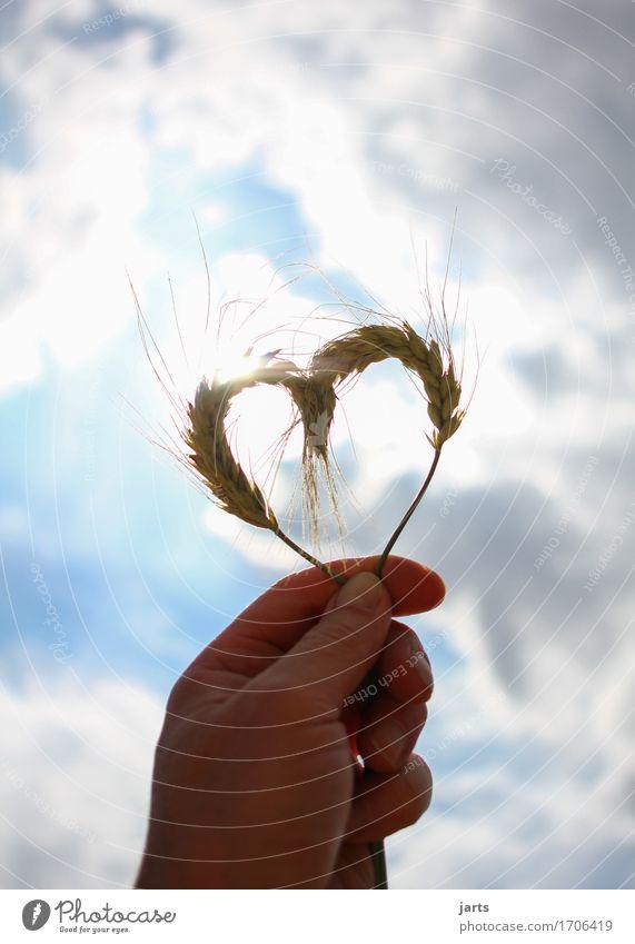 mit viel liebe Himmel Natur Sommer Sonne Hand Wolken Liebe natürlich Herz Finger Verliebtheit Umweltschutz Weisheit Nutzpflanze Verantwortung Gerste