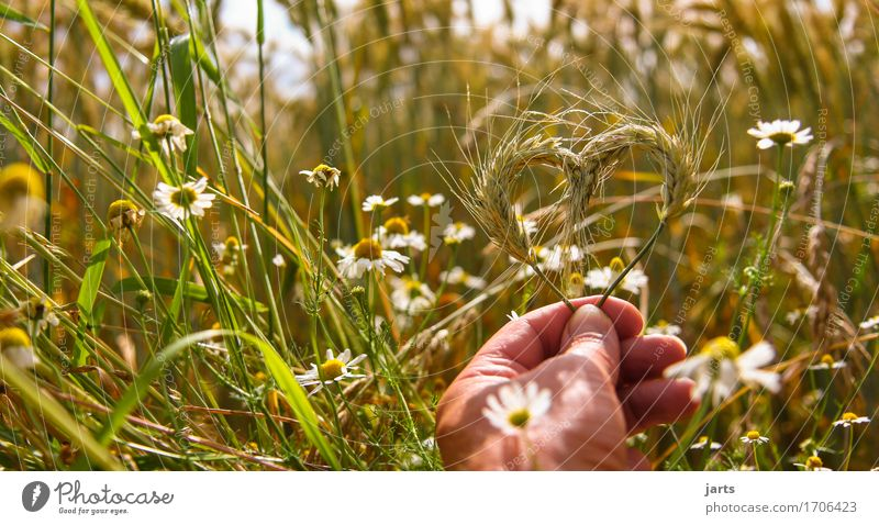 naturliebhaber Mensch Natur Pflanze Sommer Hand Umwelt Liebe natürlich Gesundheit Lebensmittel Zufriedenheit Feld frisch Kraft Herz Schönes Wetter