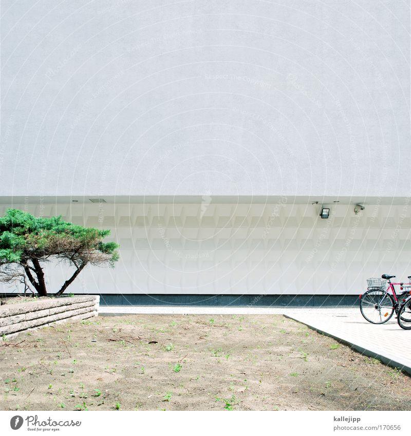 baum, bike, beton Stadt Baum Ferien & Urlaub & Reisen Pflanze Haus Leben Wand Garten Mauer Park Erde Zeit Fassade Freizeit & Hobby Klima Design