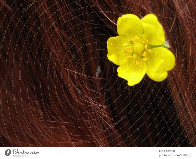Gelbe Blümchen Blume im Haar gelb Haare & Frisuren blume im haar stecken rot schick Farbfoto Ha!