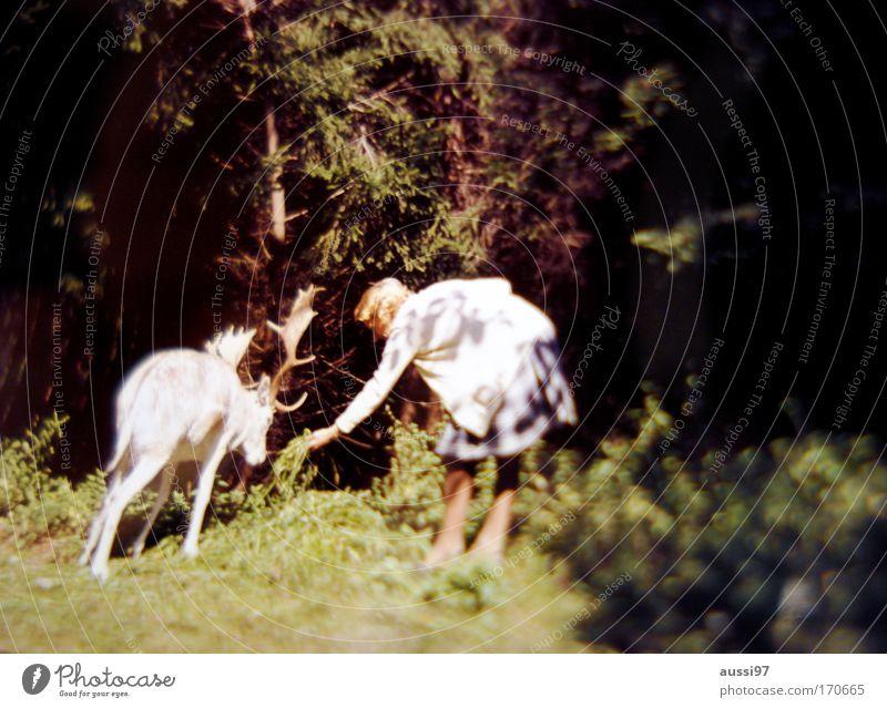 Komm her oder ich mach dich Salami. Mensch Tier feminin Zoo Wald Surrealismus Märchen füttern Elch Lebensmittel Märchenwald Salami Streichelzoo