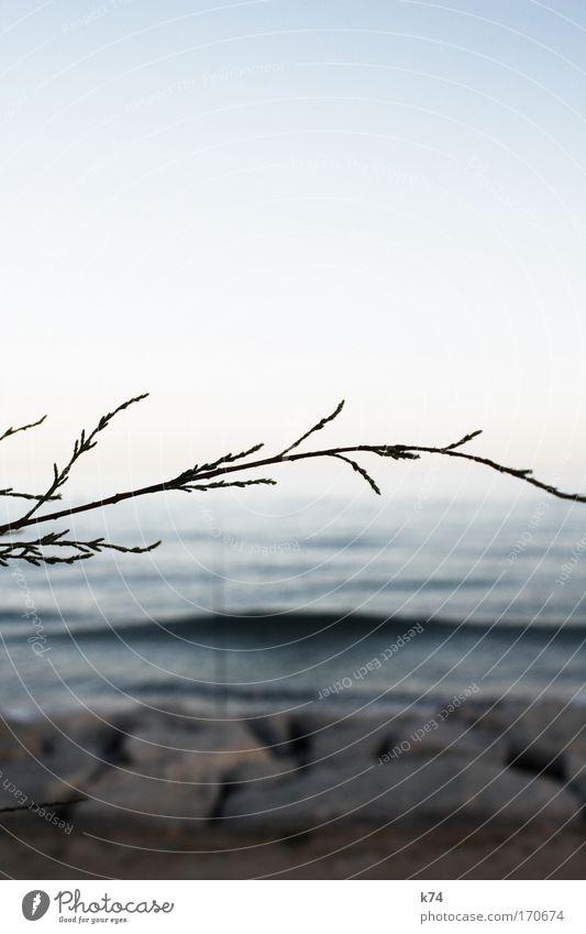 convergence Wasser Himmel blau ruhig träumen Landschaft Wellen Küste groß Horizont frisch Unendlichkeit Sehnsucht Fernweh Heimweh Sonnenuntergang