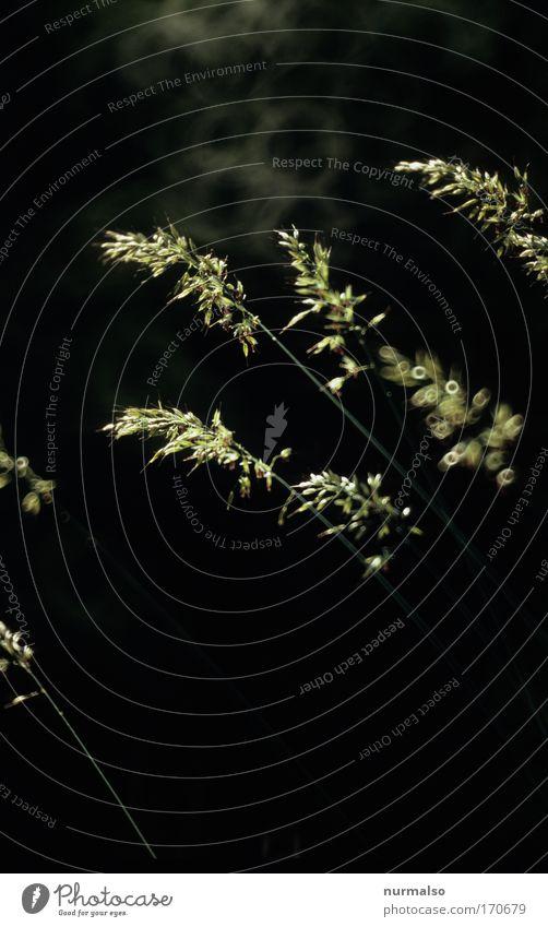 Stille Natur schön Pflanze ruhig Tier Wiese Blüte Gras Feld Umwelt ästhetisch Wachstum einfach einzigartig zart leuchten