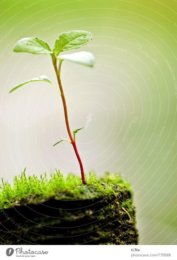 wenn ich mal groß bin Natur grün rot Pflanze Blatt Umwelt Leben klein Frühling Garten braun Erde wild natürlich authentisch Wachstum