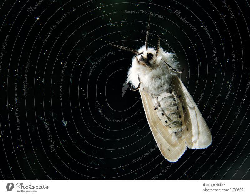Extraterrestrische mottoide Lebensform Tier Stern klein Flügel Nachthimmel zart außergewöhnlich Fell Schmetterling Weltall Surrealismus Schweben seltsam UFO zerbrechlich Außerirdischer