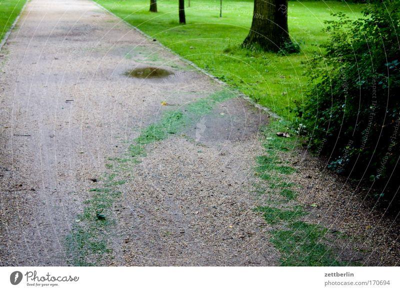 Berlin-Tiergarten Abend Dämmerung Wege & Pfade Fußweg Park Garten Gärtner Grünfläche grünflächenamt Spuren Gras Rasen Sportrasen Wiese Allee Baum Baumstamm