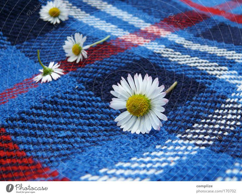 Gänseblümchen auf Kariert blau Pflanze Sonne Sommer Freude ruhig Erholung Wiese Garten Blüte Stil Park liegen Wellness Sonnenbad Wohlgefühl