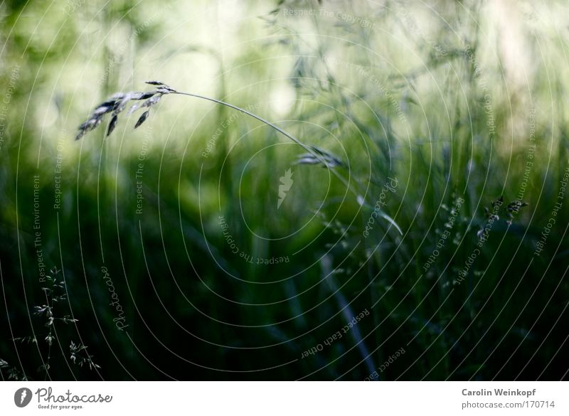Heuschnupfen VI. Natur Pflanze Sommer Farbe Umwelt Landschaft Wiese Gefühle Gras Frühling Park Stimmung Wind Feld Angst Sträucher