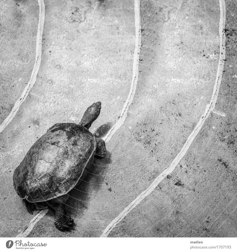 race Tier Beine laufen Eisenbahn rennen Rennbahn Schildkröte