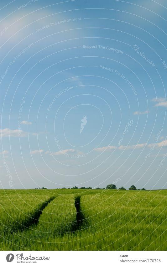 Ackerspur Ausflug Erneuerbare Energie Umwelt Natur Landschaft Pflanze Urelemente Luft Horizont Sommer Klima Klimawandel Schönes Wetter Nutzpflanze Getreide Feld