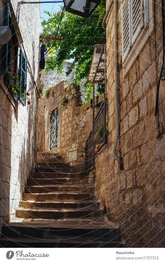 Dubrovnik XVll Ferien & Urlaub & Reisen alt Pflanze Sommer Stadt grün Blume Haus Fenster Architektur Wand Gebäude Mauer Tourismus Fassade Treppe