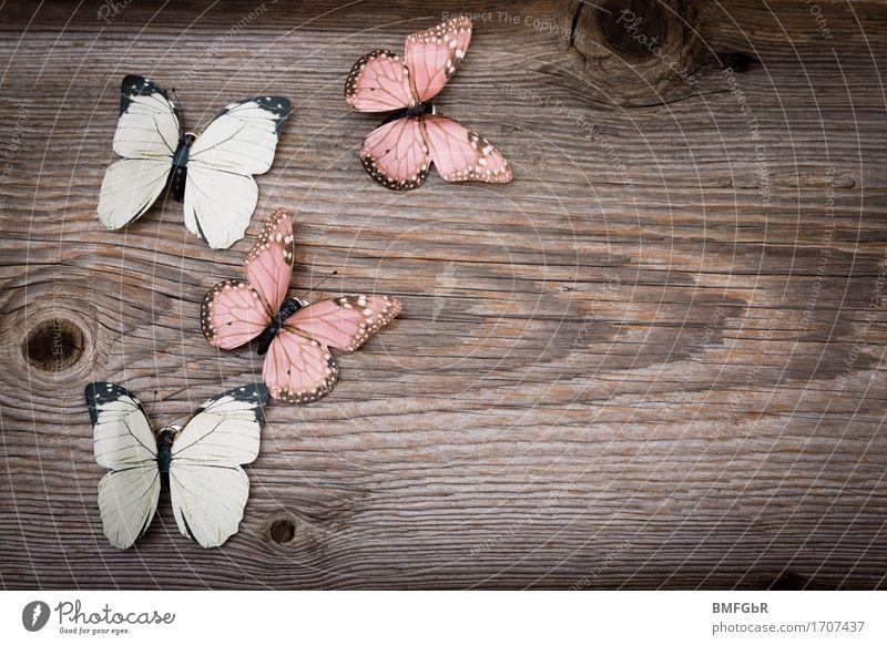 Schlichter Rahmen Schmetterlingstanz schön Freude Holz Glück fliegen braun Design Zufriedenheit frei Dekoration & Verzierung Idylle Schilder & Markierungen