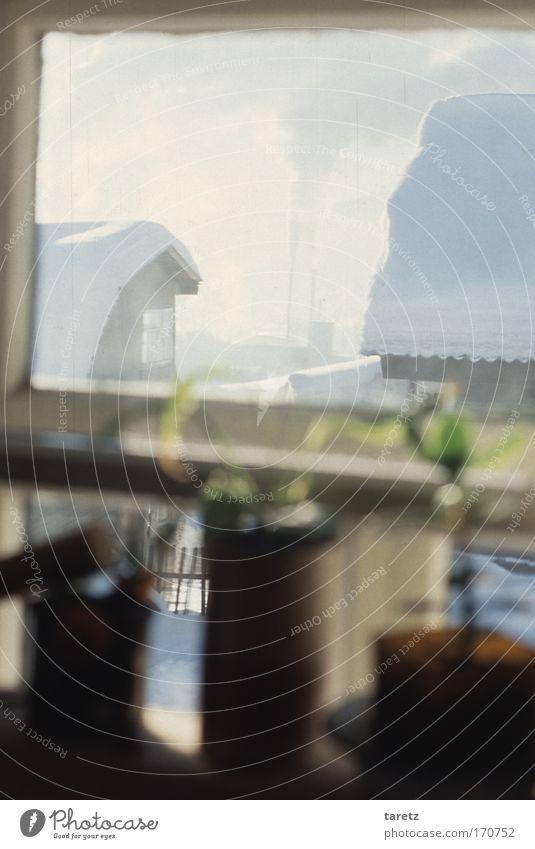 Sibirische Winteridylle Farbfoto Außenaufnahme Innenaufnahme Menschenleer Tag Unschärfe Schwache Tiefenschärfe Zentralperspektive Umwelt Himmel Schnee Pflanze