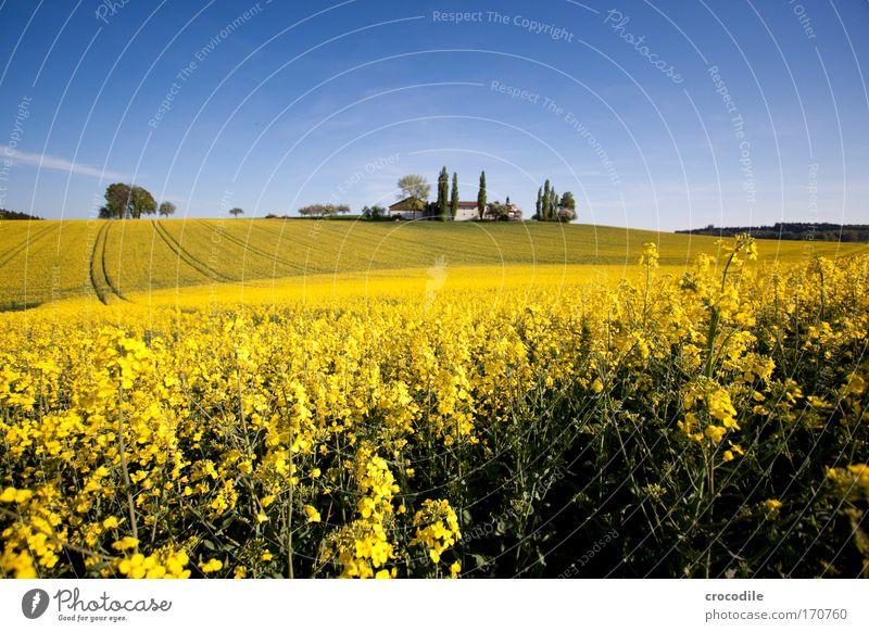 Raps #17 Natur Himmel Baum Pflanze Haus Wolken Gefühle Frühling Glück Gebäude Landschaft Stimmung Feld Umwelt Energiewirtschaft Kirche