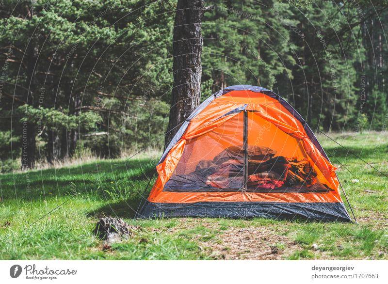 Orange Zelt in einem Kiefernwald Erholung Freizeit & Hobby Ferien & Urlaub & Reisen Tourismus Abenteuer Camping Sommer Berge u. Gebirge wandern Natur Landschaft