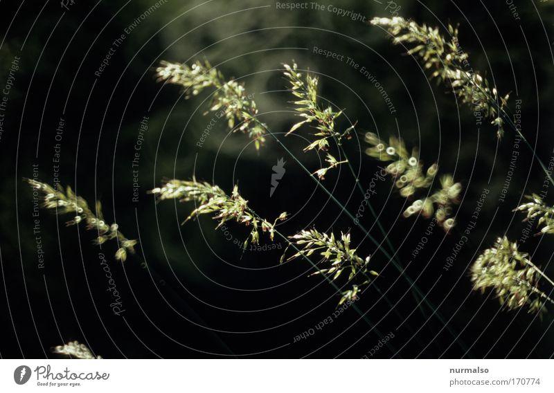 Stille II Farbfoto Dämmerung elegant Glück Ausflug Umwelt Natur Pflanze Tier Gras Blüte Halm Stengel Veronica Park Wiese Feld Blick stehen einfach schön