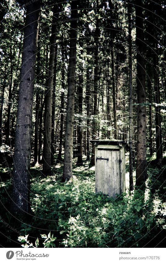 ruheort Farbfoto Gedeckte Farben Tag Hütte Plumpsklo gebrauchen sitzen Toilette Wald Baum Baumstamm Waldlichtung ruhig defäkieren Stuhlgang Menschenleer