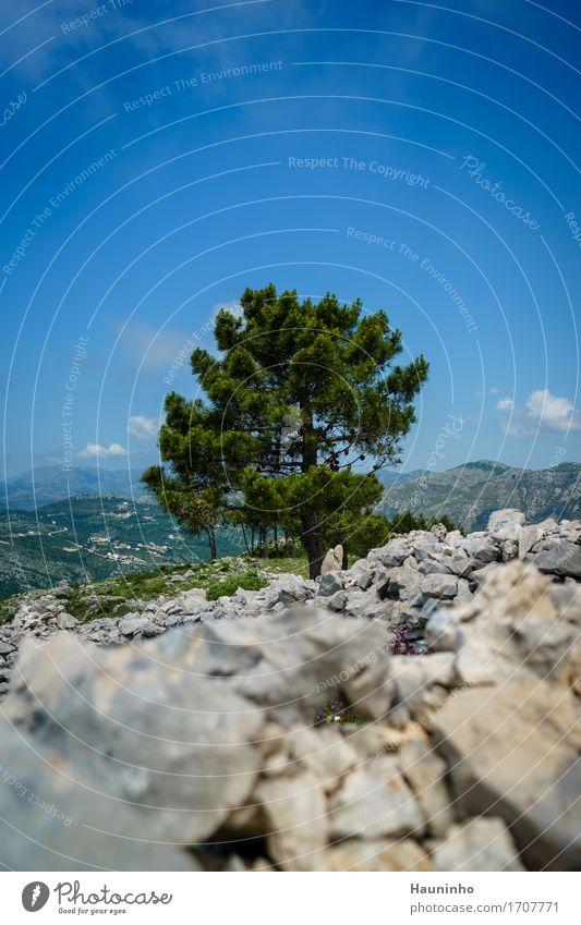 Dubrovnik Xl Himmel Natur Ferien & Urlaub & Reisen Pflanze blau Sommer grün Baum Landschaft Berge u. Gebirge Umwelt Wiese Gras Freiheit grau Stein