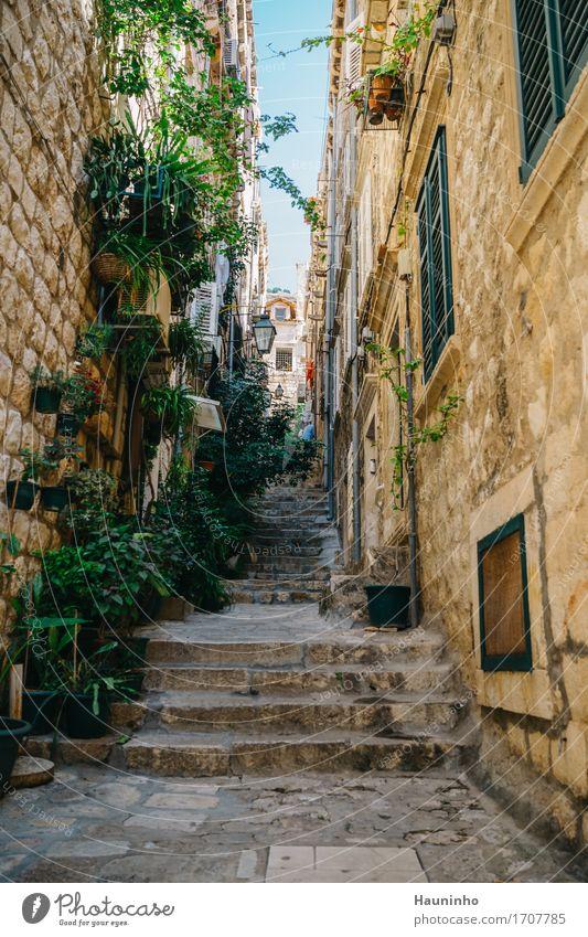 Dubrovnik lX Ferien & Urlaub & Reisen Stadt Pflanze Sommer grün Blume Haus Fenster Architektur Wand Gebäude Mauer braun Fassade Wohnung Häusliches Leben