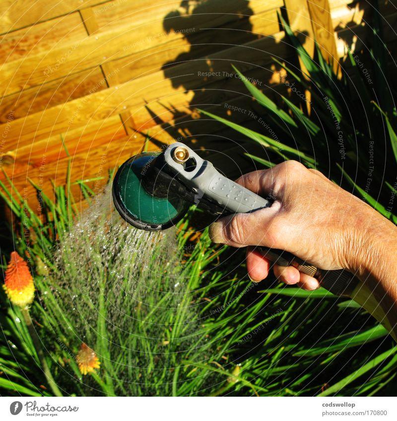 marie arrose son jardin Farbfoto Außenaufnahme Sonnenlicht Garten Gartenarbeit Hand Natur Pflanze Bewässerung gießen Schlauch Gartenbaumeisterin Hausgarten
