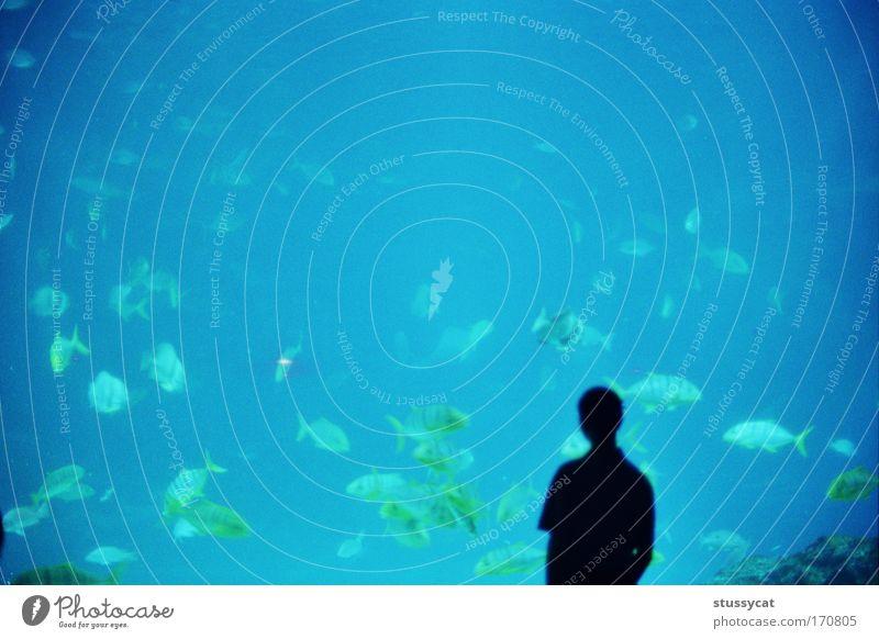 Mensch Wasser blau schwarz Leben Denken Luft Erde Fisch Häusliches Leben Tiergruppe Neugier unten Kontakt Museum Taiwan