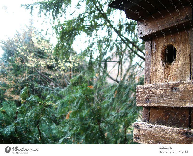 Brutstätte Haus Wald Vogel Nest Gelege