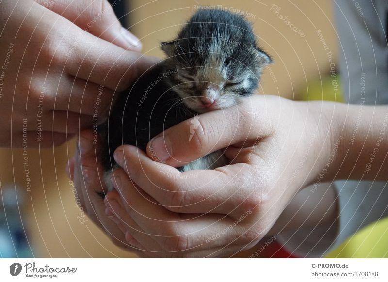 Katzenbaby Mensch Kind Hand Tier klein Zufriedenheit niedlich schlafen Schutz festhalten streichen Fell Haustier Fürsorge Geborgenheit