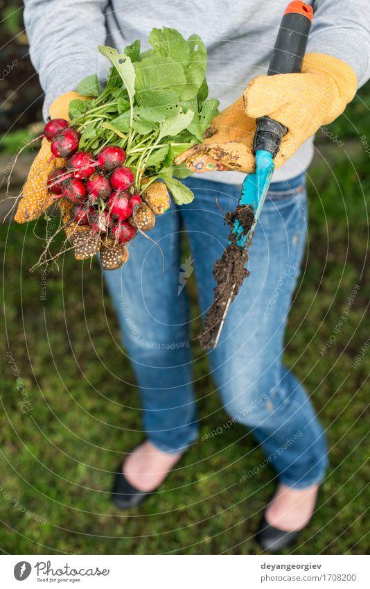 Frau Natur Pflanze Sommer grün Hand rot Erwachsene Garten frisch Gemüse Bauernhof Ernte Vegetarische Ernährung Gartenarbeit Halt